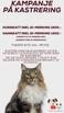 Kampanje på Kastrering hunn- og hannkatt. Gjelder ut april 2020