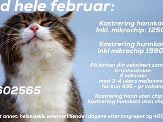 Februar er kattens måned! Tilbud på kastrering, id.merking og vaksinering