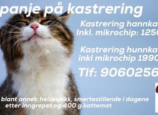 Kampanje på kastrering hann- og hunnkatt fra September 2018
