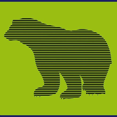 MOIRE BEAR / TV JM