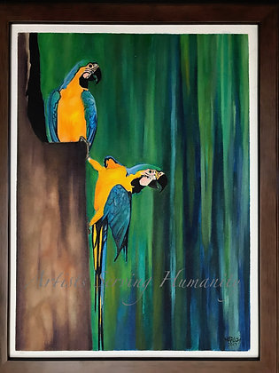 Two Beautiful Macaw Parrots