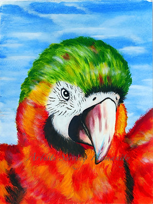 "The Parrot is ""Cotorro"" - Coqueto"