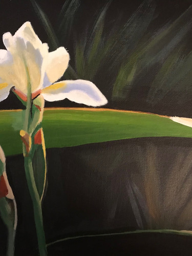# 6  A. Ott - The Iris