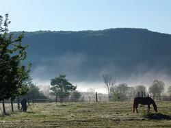 Ranch Dreams