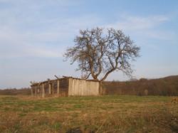 Bajta i drvo