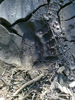 Bear-foot