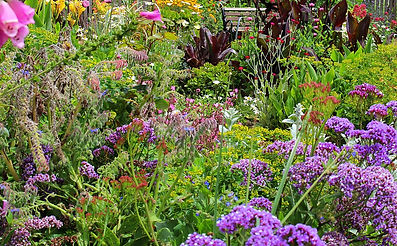 Soft Landscaping, planting