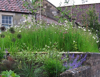 Wild Flower Turf. Landscape Garden Servces in Kingston Upon Thames and surrounding areas