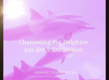 Aktuelles Channeling der Delphine