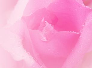rosa bild.png