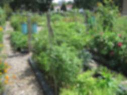 ruby garden 1.jpg