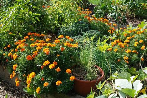 dubkin park garden 1.jpg