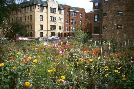 howard community garden.jpg