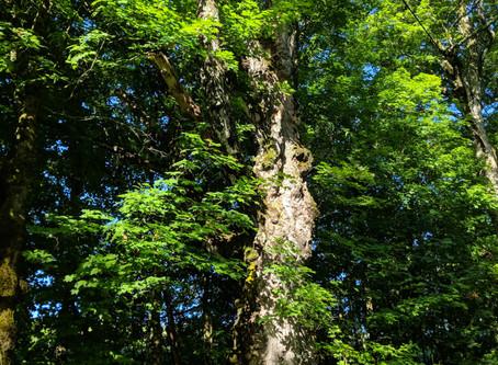 The Torah of Trees