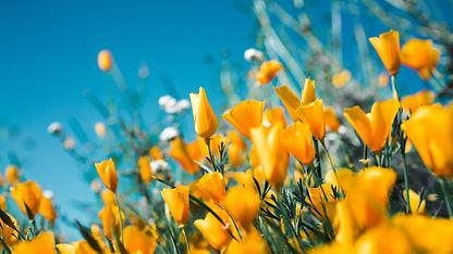 yellow flower joy.jpg