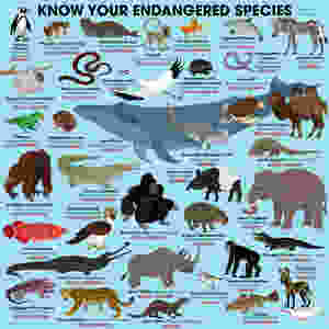37 of the most recent and well-known endangered spiecies