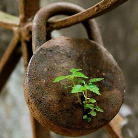 Growing out of a Lock.jpg