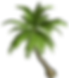 palm tree transparent.png