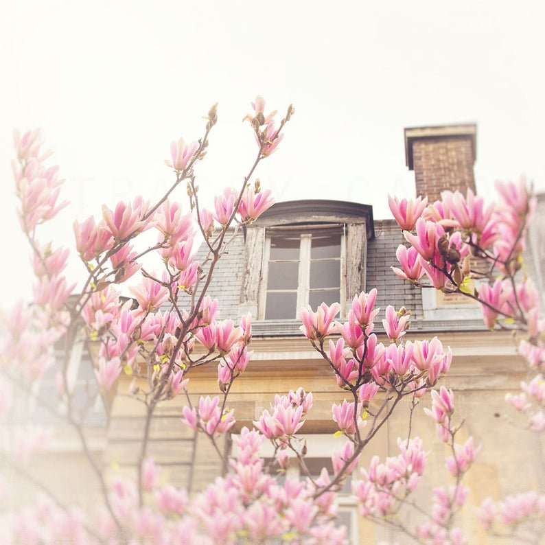 Magnolias in a Window.jpg