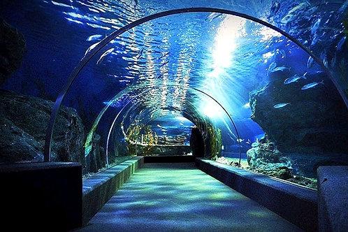 Bangkok- Sea Life Bangkok Ocean World (Child)