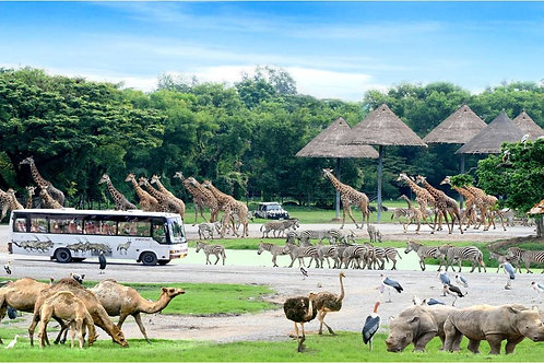 Bangkok- Safari World + Marine Park Admission (Child)