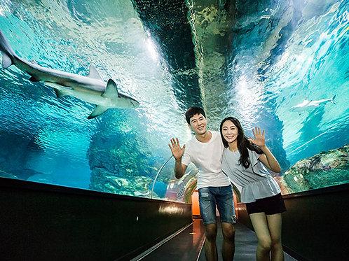 下午遊 4 Coex水族館, 漢江遊船
