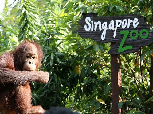 新加坡日間動物園 (門票+遊覽車) Singapore Zoo