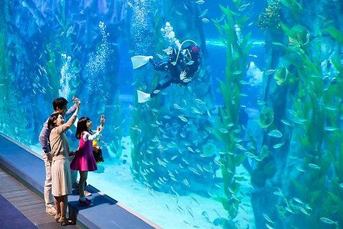 樂天世界 + 樂天世界水族館1日套票 Seoul Lotte World + Aquarium