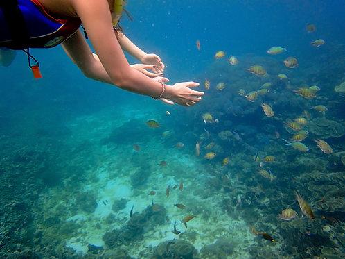 Sabah-Snorkeling Mantanani Island (Adult)