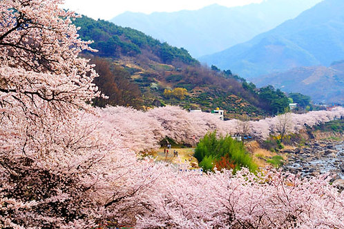 Seoul-Cheong Hak Dong, Cherry Blossom Path, Maisan Temple and Hanok Two-Day Tour