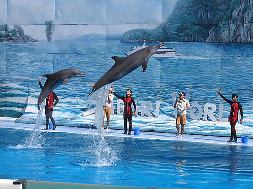 Bangkok- Safari World + Marine Park Admission & Buffet Lunch