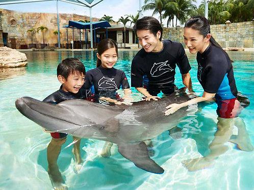 聖淘沙名勝世界海豚園互動體驗