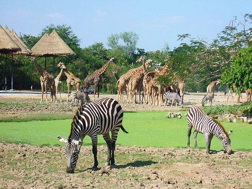 泰國-曼谷野生動物世界與海洋公園入場+自助午餐
