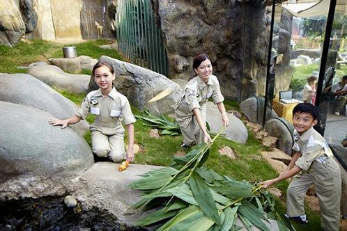 香港海洋公園大小熊貓護理員  Hong Kong - Ocean Park Panda Keeper
