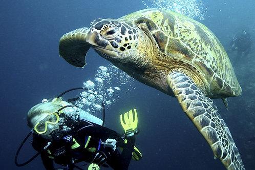 Sabah- One-Day Scuba Diving Trip