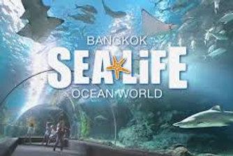 泰國-海洋生物曼谷海洋世界入場門票