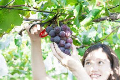 南怡島+晨靜樹木園+採摘時令水果體驗(星期一、三、五出發)