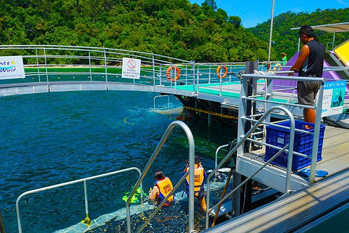 Sabah-Snorkeling in Borneo Reef World (Child)