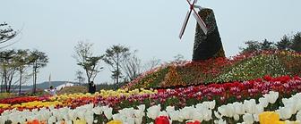 韓國-世界五大 鬱金香慶典一天團