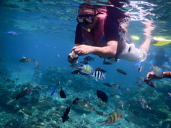 # snorkelling