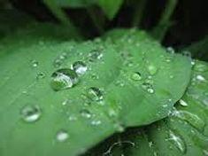 drops on leaf.jpg