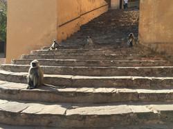 Monkey greeting in Jaipur