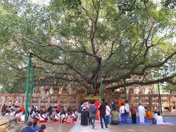 Bodhi tree in Bodhgaya