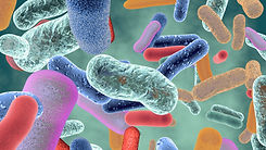 bacteria-2.jpg