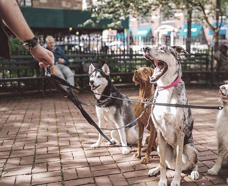 Psi s Dog Walker
