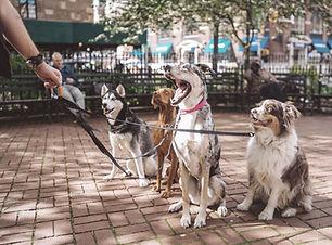 Mehr Hunde Rabatt