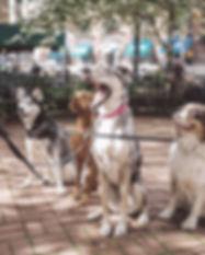 Educateur Angers 49 eduquer reeduquer education canine cours collectifs chien club canin professionnel methode positive Brissac dressage dresseur
