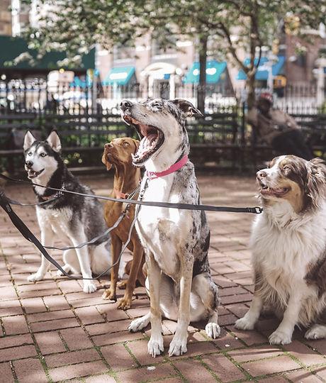 Hundar med hund Walker