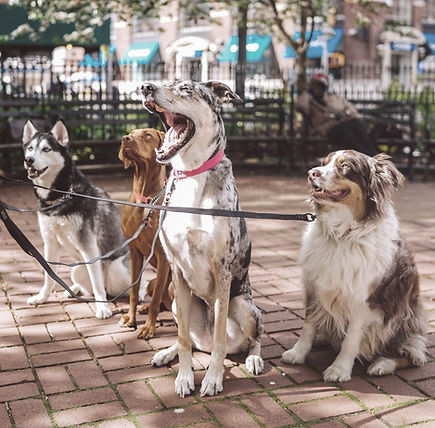 K9-Behavior Company | Dog Training in OR | Dog Training in Roseburg | Dog Training in Douglas County | Train Your Dog Fast | Pet Dog Training | Truffle Dog | Bite Prevention Training