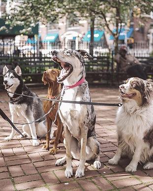 Köpek Walker ile Köpekler